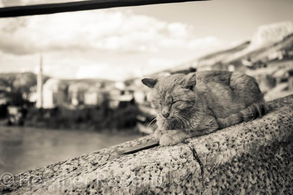 This scraggly guy was napping on the bridge.