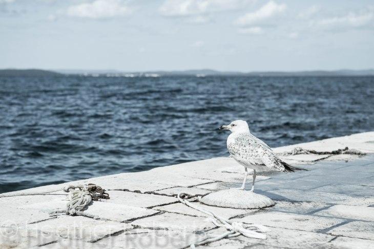 Zadar-0584-2